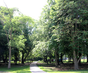 Beautiful shot of trees running along one of campus' pathways