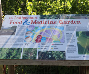 The sign that provide information on the Indigenous food and medicine garden